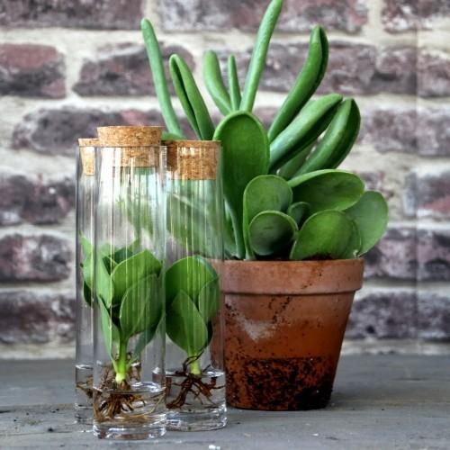 Planten