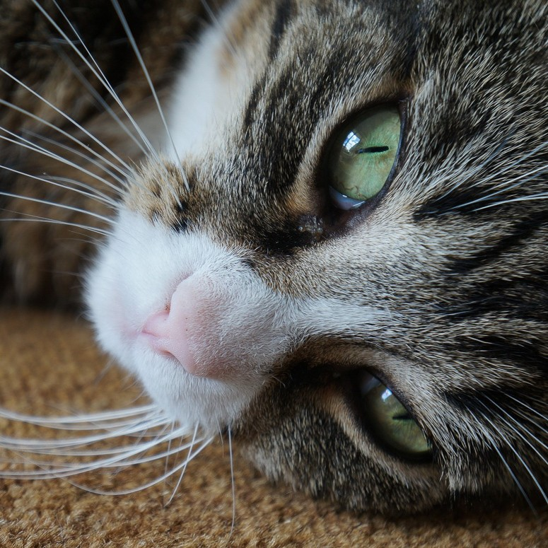 Dierenafdeling kat