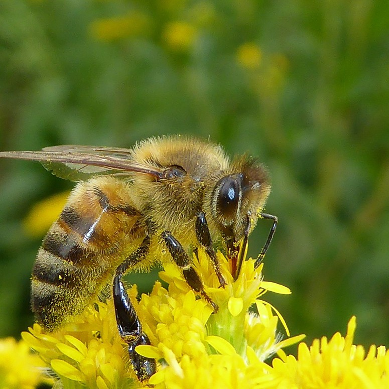 Insectenhotel bijen