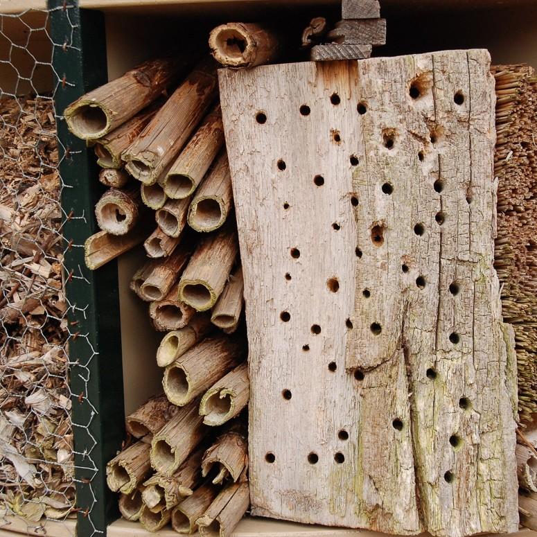Insectenhotel insecten