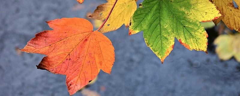 koopzondag herfst de huifkar