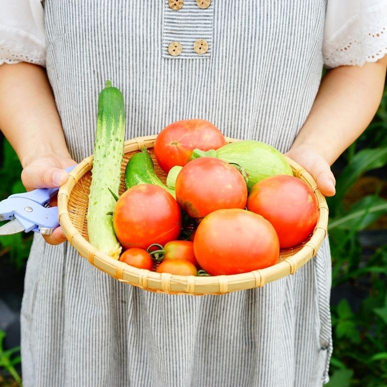 moestuin groenten